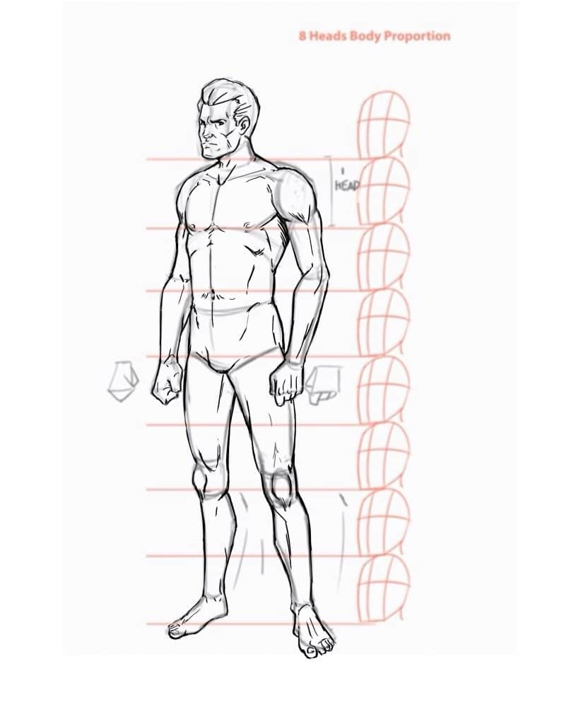 Artist Body Proportions