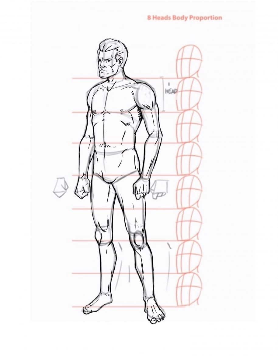 how to draw the human body step by step how to draw a person tutorial Component Parts of Basic Anatomy of Skin how to draw the human body step by step