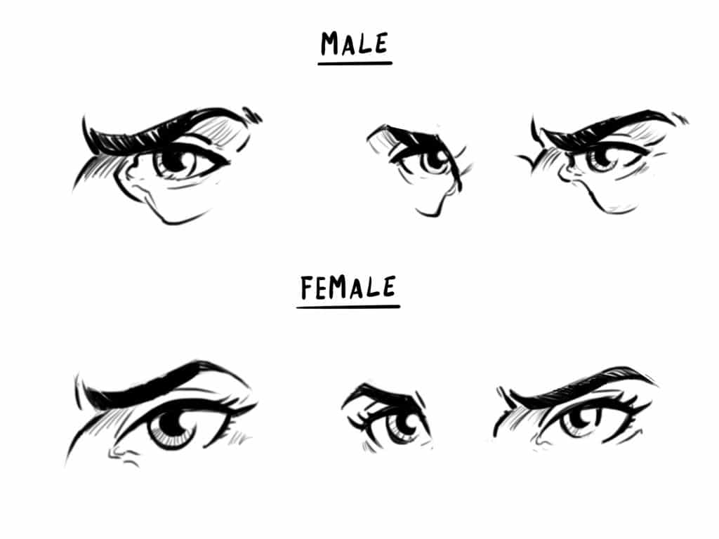 How to Draw a Face   Drawing the Male and Female Head   Front and 3/4